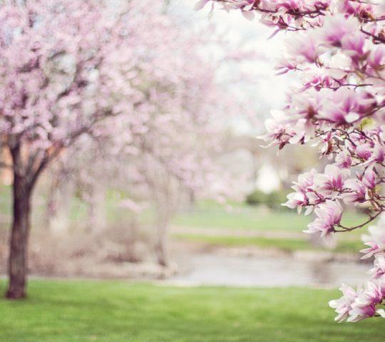 Trenčkot na jaře.